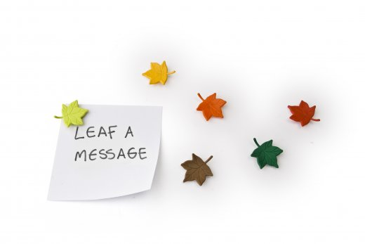 Sada magnetov QUALY Leaf a Message, (listy) 6 ks.